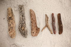 Wooden stumps collection Stock Photos