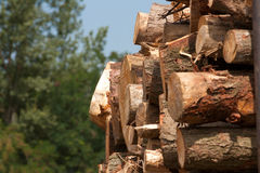 Wooden stumps stacked. All together Stock Photos