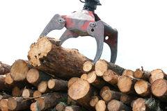 Wooden stumps stacked. All together Stock Images
