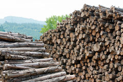 Wooden stumps stacked. All together Stock Photography