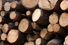 Wooden stumps stacked. All together Royalty Free Stock Photography