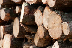 Wooden stumps stacked. All together Stock Photo