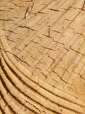 Wooden surface. Cut wooden surface texture suitable as background Stock Photography