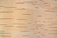 A wooden surface Royalty Free Stock Images