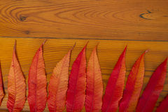Wooden surface with autumn leaves Royalty Free Stock Image