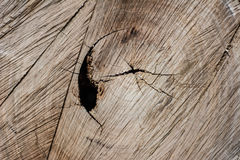 Wooden surface Royalty Free Stock Photography