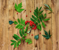 On a wooden surface lies a rowan branch and green leaves. Autumn still life. Berries of mountain ash and green leaves on a wooden surface Royalty Free Stock Photography