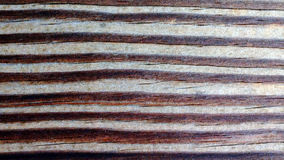 Wooden Surface and Texture. Cracked and weathered wooden plank background, texture and wallpaper Stock Images