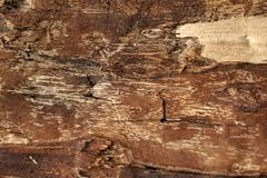 Wooden surface, textured and detailed. Old rough and weathered wooden surface close up, dirty, textured and detailed Stock Image