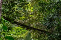 Wooden suspension bridge in the rain forest royalty free stock photography