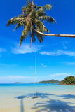 Wooden swing on a coconut palm. Beautiful sea landscape Royalty Free Stock Photo