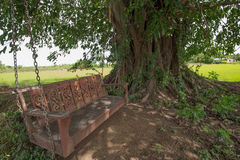 Wooden swing. Under a big tree near the pond and pastures Stock Photography