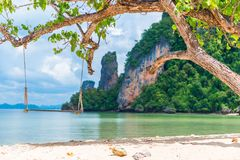 Wooden swing under a tree on the beach in a beautiful paradise o Stock Image