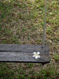 Wooden swing with white Plumeria Stock Images