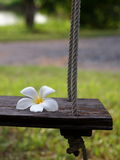 Wooden swing with white Plumeria Royalty Free Stock Photos
