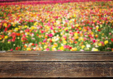 Wooden table against field of colorfull flowers Royalty Free Stock Images