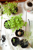 Wooden table with aromatic herbs royalty free stock photography