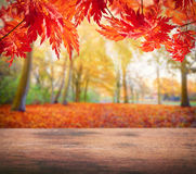 Wooden table with autumn trees Royalty Free Stock Images