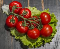 Branch red tomatoes on dark background Stock Image
