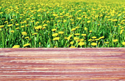 Wooden table on a background field of dandelions Stock Images