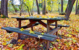 Wooden table and bench. In a forest at fall Stock Images