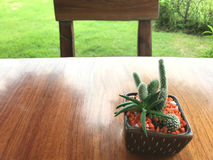 Wooden table of brown and small green cactus. chair and grass Stock Photo