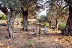 Wooden table and chairs in the shade of the grove of olive trees Royalty Free Stock Photos