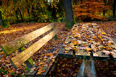Wooden table covered with yellow leaves Stock Image