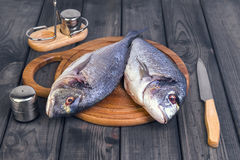 Wooden table cutting board with fresh raw dorado fish. Gutted, near the knife, salt and pepper Royalty Free Stock Images