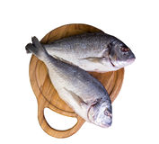 On a wooden table cutting board with fresh raw dorado. Fish gutted, near the knife, salt and pepper - top view Stock Photos