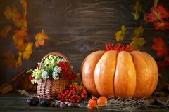 The wooden table decorated wild with flowers by pumpkins and autumn leaves. Autumn background. Happy Thanksgiving Day Royalty Free Stock Images