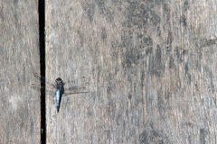 Wooden table with dragonfly Royalty Free Stock Photos