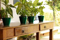 Wooden table with drawers and pots of plant on top royalty free stock photos