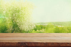 Wooden table in front of spring cherry blossoms tree Royalty Free Stock Images