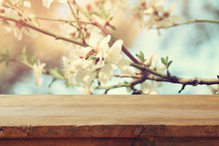 Wooden table in front of spring cherry tree Stock Photography