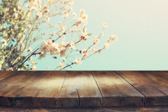 Wooden table in front of spring cherry tree Stock Image