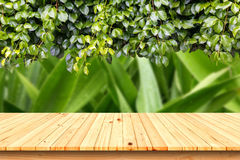 Wooden table in the garden,for product placement. Royalty Free Stock Photography