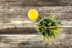 Wooden table with green plant and orange juice Stock Image