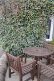 Wooden table with ivy background. Garden table and chairs with ivy covered wall Stock Photos