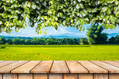 Wooden table and ivy plant isolated. Wooden table and ivy plant isolated on a rice field Royalty Free Stock Photos