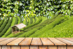 Wooden table and ivy plant on tea plantation. Background Stock Photo