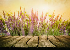 Wooden table with lavender Stock Photography