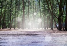 Wooden table and nature pine forest.  royalty free stock images
