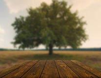 Wooden table outdoors with autumn field background Stock Images