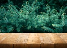 Wooden table on pine tree.nature and christmas decoration Royalty Free Stock Photography