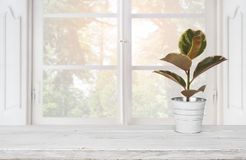 Wooden table with plant pot on blurred background of window.  Royalty Free Stock Photography