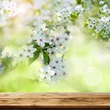 Wooden table with spring blossoms Royalty Free Stock Photography