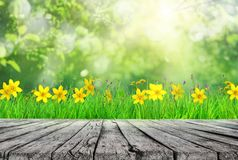 wooden table and spring grass royalty free stock image