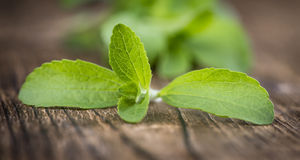 Wooden table with Stevia leaves (selective focus). Old wooden table with Stevia leaves (selective focus; detailed close-up shot Royalty Free Stock Photos