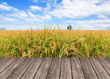 Wooden table or terrace on rice field and blue sky and empty dis royalty free stock photography